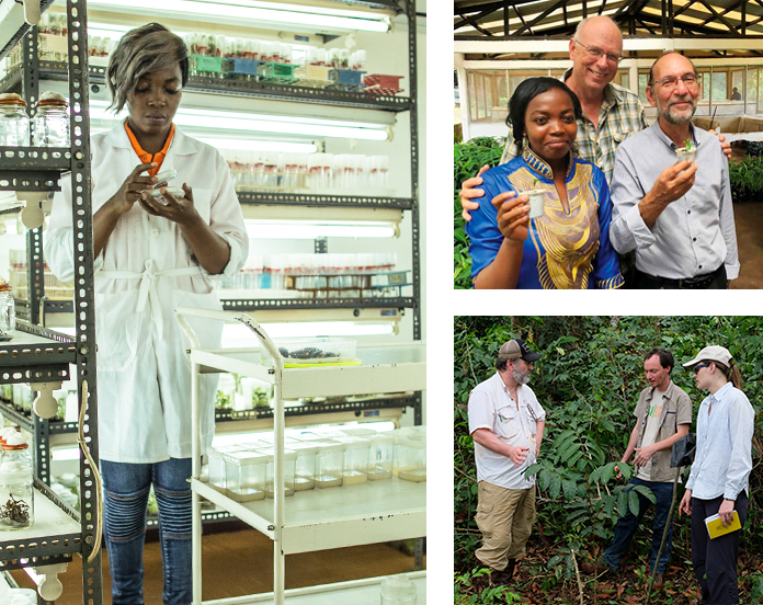 ... who has been working exclusively on The Ebony Project. These  discoveries have shaped the development of a larger replanting blueprint  involving local ...